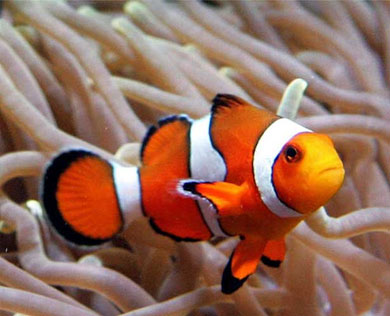 Bony Fish - Animals and Plants - Find Fun Facts