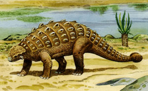 As A Nodosaurid It Lacked Bony Club At The End Of Its Tail But Made Up For That With Formidable Array Shoulder Spikes