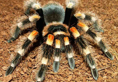 spiders animals and plants find fun facts