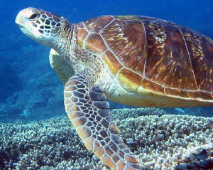 Turtles Live In Water : Turtles and Tortoises - Animals and Plants - Find Fun Facts