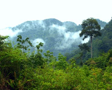 Tropical Rainforest of Sarawak
